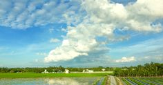 On the way to Can Tho. Rice fields with beautiful sky