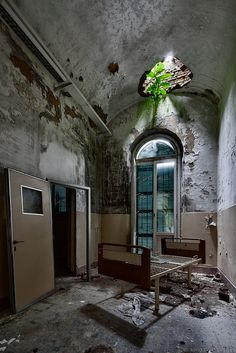 I love the light and life breaking in to this old abandoned asylum. I would love to go there one day .