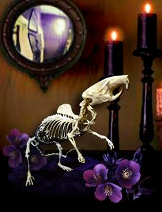 Only 1 in stock on Etsy! Articulated skeleton, fancy rat, decor, real bones