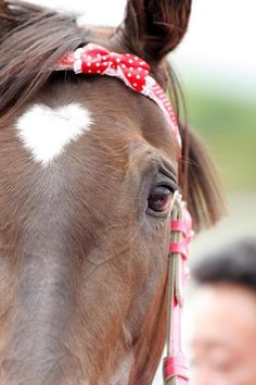 Such a cute idea for a bridle or halter! Wish I had a mare. (Also, I love this horse's heart shaped star!)