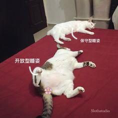 Sleeping beauties on bed (BaiBai and LaiLai).  www.facebook.com/Slothstudio