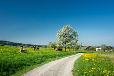 #schweiz#switzerland#suisse#svizzera#thurgau Country Roads