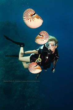 Chambered Nautilus Lets Go Diving Amazing discounts - up to off Compare… Underwater Pictures, Underwater Life, Under The Ocean, Sea And Ocean, Beneath The Sea, Ocean Creatures, Beautiful Ocean, Sea Fish, Sea World
