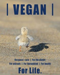 VEGAN. Because I care. For the Planet. For Animals. For Humankind. For Health. FOR LIFE. #Veganism http://www.joanlandinosays.com/exploring-the-protein-myth-of-vegan-diets