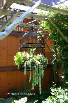 Love the trailing plant in this bird cage. I believe it might be donkey's tail.