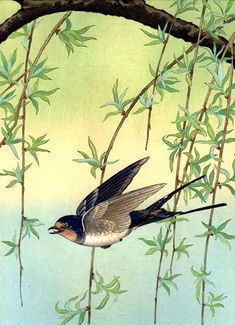 Bluebird and Willow by Ohara Koson, 1930