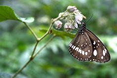I desire butterflies.  Such a gentle, peaceful and desired one creatures. :)    Photo from: http://chloe192.deviantart.com/art/Don-t-flutter-away-291329982