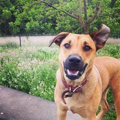 Can we play now? - Dogbone Meadows at O'Hair Park - Novato, CA - Angus Off-Leash #dogs #puppies #cutedogs #dogparks #bigdogs #novato #california #angusoffleash