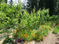 how to create a food forest- Permaculture Artisans