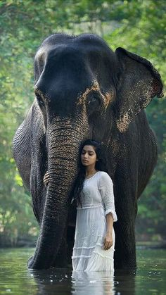 beautiful photo elephant and young woman. Photo Elephant, Asian Elephant, Elephant Love, Animals And Pets, Baby Animals, Cute Animals, Baby Elephants, Beautiful Creatures, Animals Beautiful