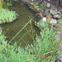 Build habitats for Australian animals e.g. frog pond, possum nest box, butterfly box, ladybird house, microbat roosting box, gardening to attract wildlife