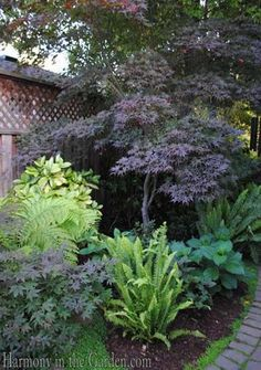 Transforming a side yard from Blah to Beautiful — Gossip in the Garden  Dwarf varieties of shrubs