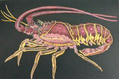 Spiny Lobster Drawn By Tim Jeffs Colored Susan