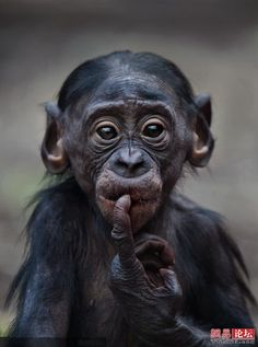 Sweet monkey face