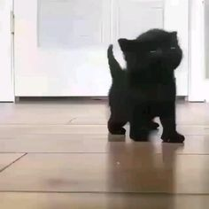 Cute Cats And Kittens, Baby Cats, Kittens Cutest, Black Kittens, Baby Sloth, Kitty Cats, Ragdoll Kittens, Bengal Cats, Cool Cat Trees