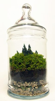 Adding sculpted evergreens into the moss terrariums to make it look like a forestscape