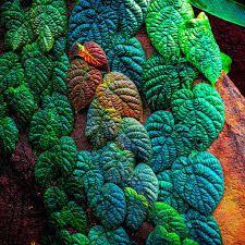 Картинки по запросу лиана дерево
