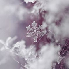 Holiday, Snowflake, Winter Photography,Fine Art Print,  Lavender, Romantic, Winter, Macro, Wall Art, Wall Decore,Home Decore
