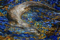 In harmony with the water - Rhian Symes