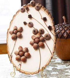 acorns for making home decorations