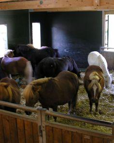 Thiais : interpellé à 74 ans en plein acte sexuel avec un poney