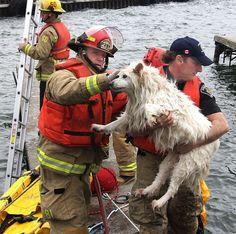 15 photos de pompiers qui risquent leur vie pour des animaux