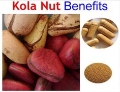 Some of the health benefits of Kola Nuts for your baby includes improvement of their metabolism, boosting digestion and protection against infections. Nut Benefits, Health Benefits, Toddler Meals, Kids Meals, News Health, Health Tips, Natural News, Tasty, Yummy Food