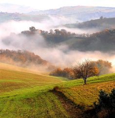 I love how rolling hills laced with early morning fog romances me..
