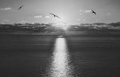 Imagini pentru beauty black and white