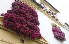rejas y balcones @cordoba