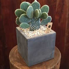 Succulent in a square vase with black sand white rock los angeles succulent in a square vase with black sand white rock los angeles flower delivery succulents pinterest flower delivery terraria and flower mightylinksfo