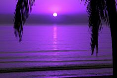 ✧ Mesmerizing Nature ✧ - color-me-purple-nyc: Sunset Purple Sunset, Purple Love, All Things Purple, Purple Rain, Shades Of Purple, Pink Purple, Purple Beach, Purple Stuff, Deep Purple