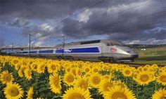 TGV train, France
