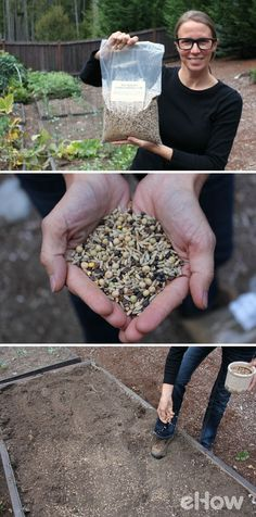 Cover crops are different than your typical garden seeds, because you are not growing them to eat. You grow them simply to improve the soil during the late fall and winter months.