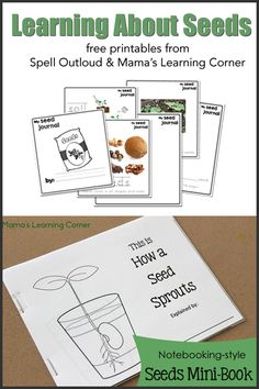Learning About Seeds from Spell Outloud and Mama's Learning Corner - seed journal for preschoolers and mini-book and seed observations chart for Kindergarten Science, Science Classroom, Teaching Science, Science For Kids, Science Activities, Time Activities, Writing Activities, Seed Activities For Preschool, Preschool Projects