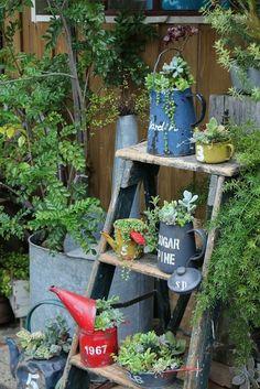 リメ缶リメイク鉢に多肉植物を植えてジャンクガーデンを楽しもう
