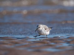 Getting Down Low in Wildlife Photography - Digital Photography School