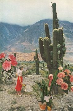 Available for purchase Desert Cactus Plants Landscape Flowers Lady America Painting Art Classic Sky Nature Beautiful Green Pink Red Orange Garden Alphonse Mucha, Cactus Plante, Desert Dream, Photocollage, Foto Art, Collage Art, Collages, Nature Collage, Art Nature
