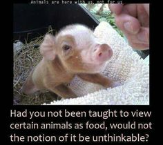 just place a cat or dog in this little piggy's place, now, how do you feel about eating meat?! make the connection…you already know it