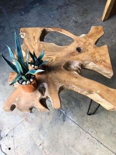 Teak wood root coffee table