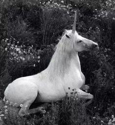 Imagem de unicorn, horse, and flowers