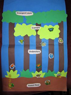 Rainforest topic / Classroom display idea