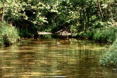 clear stream in the Missouri Ozarks