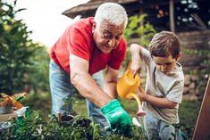 Ezt az olajat használd a kertben, minden kártevő azonnal elpusztul! - Blikk Rúzs Garden Pictures, Garden Photos, Garden Projects, Garden Tools, Hand Photo, Cool Plants, 5 Ways, Royalty Free Images, Health And Wellness