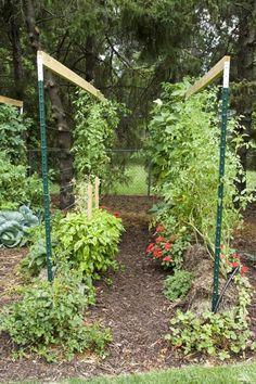 straw bale garden trellis