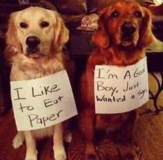 Funny Animal Picture Dump Of The Day 25 Pics