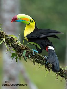 Photograph I Am So Pretty !!!!!!!!!!!!!!! - Toucan - by Judylynn Malloch on 500px-