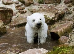 Cute Pictures of Baby Animals_10