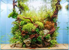 Lindo emaranhado neste aquário plantado!