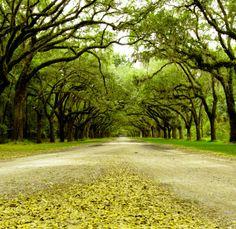 Take a walk down a Savannah road